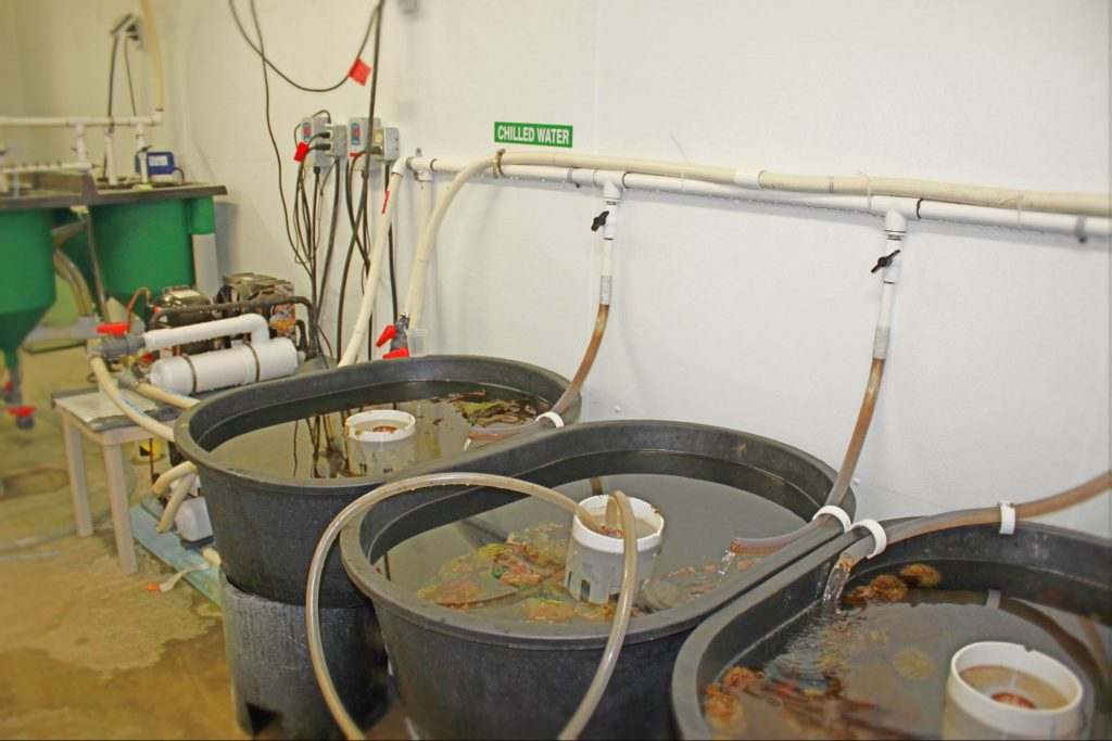 Tanks in our Quoddy facility